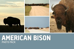 American Bison Photo Pack-12 Photos
