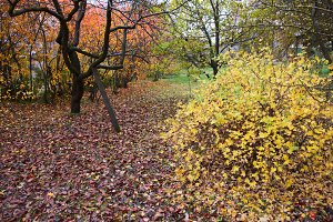Fruit garden in autumn