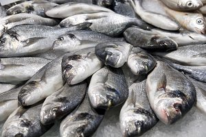 Pile of silver fish on ice