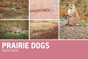 Prairie Dogs Photo Pack