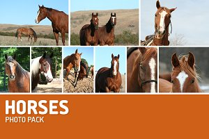 Horse Photos-Pack of 9
