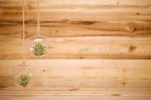Two Tillandsia Ionantha in glass ♥