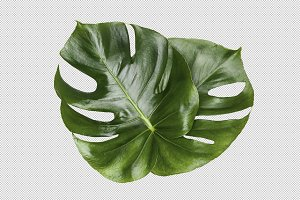 Printable Art - Monstera Leaves