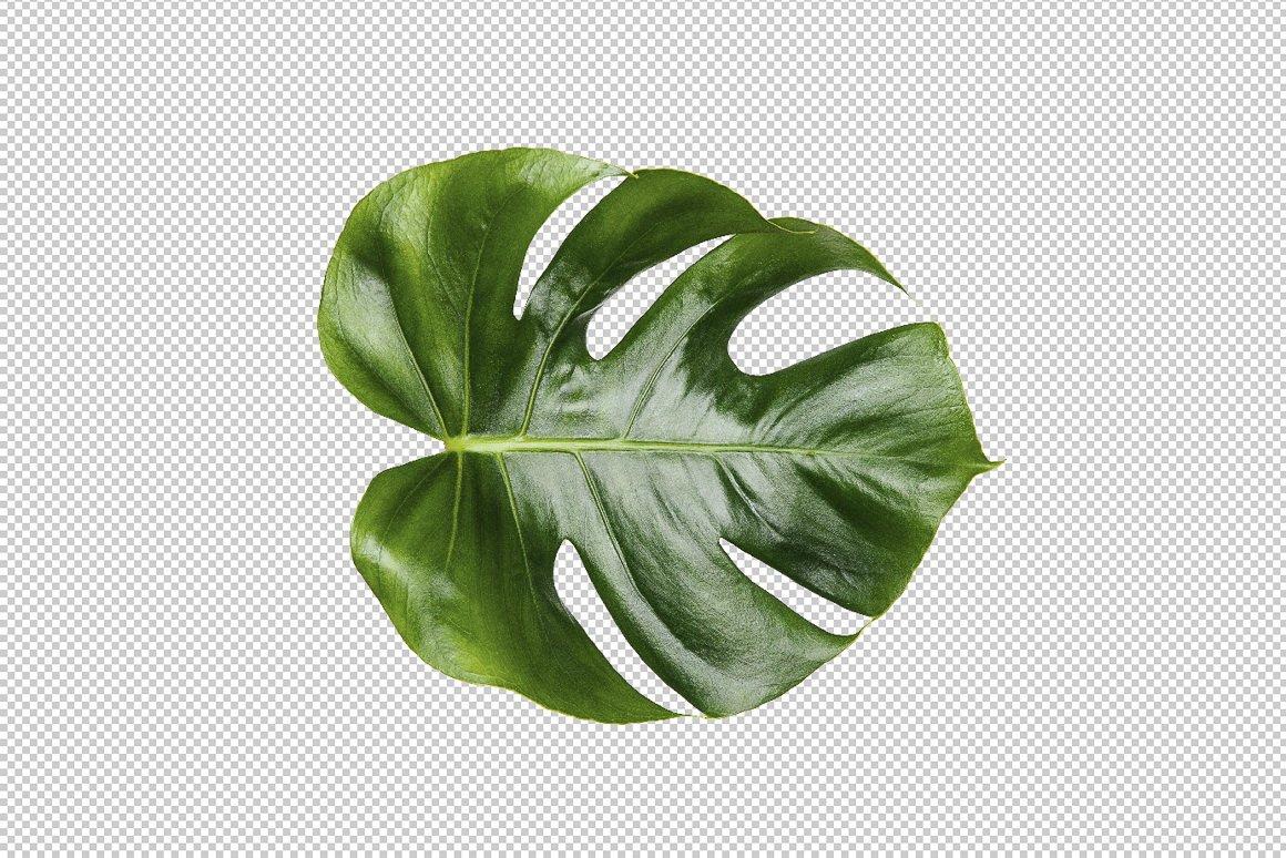 Printable Art Monstera Leaf Print Mockups Creative