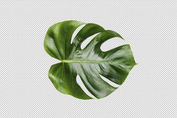 Printable Art - Monstera leaf