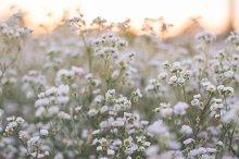 Prairie wildflowers