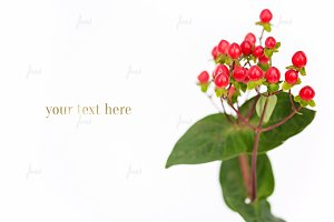 Styled Floral - Hypericum Berries