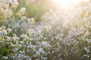 Wildflowers in the prairie