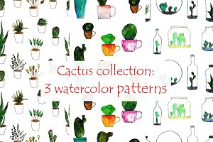 Unusual cactus patterns