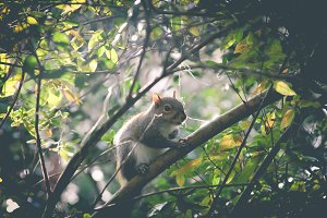 Squirrel in Tree II