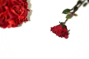 Simply Red: Bouquet & Rose Stock