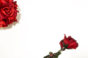 Simply Red: Roses Mockup