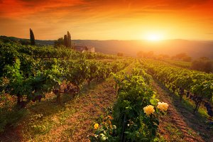 Picturesque wine farm, Tuscany.
