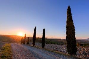 Cypress trees road, Tuscany.