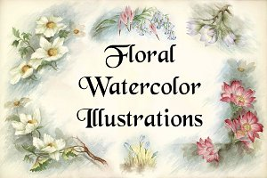 Floral Watercolor Illustrations