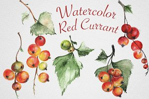 Set of watercolor red currants