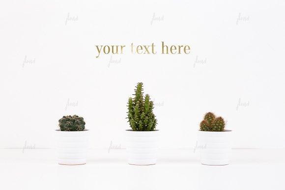 Free Cacti on white, photo-based mockup ♥