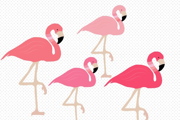 Flamingo clipart Photos, Graphics, Fonts, Themes ...