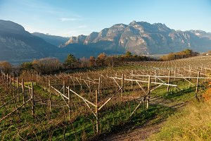 Vineyards of Trentino area