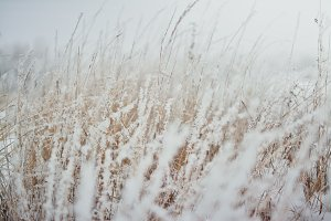 Blurred frosted grass background