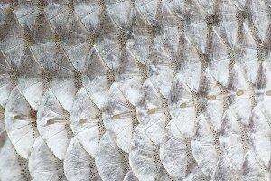 Macro shot of roach fish skin