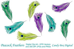 Peacock Feather Clip Art w/Vectors