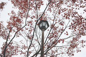 Streetlight and red leaves tree