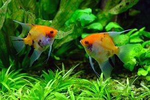 Fish in an aquarium 3