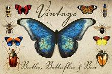 Vintage Beetles, Butterflies & Bees