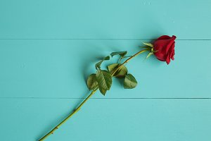 Red rose on blue wooden background f