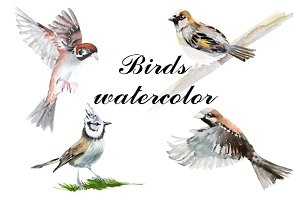 birds illustration watercolor