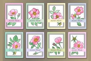 8 Rose Cards
