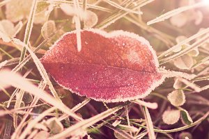 Yellow leaf and grass in frost