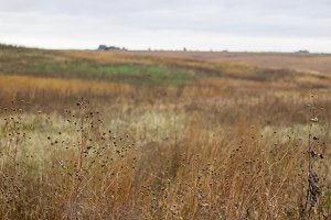 Natural prairie grass
