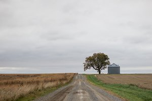Midwest tree