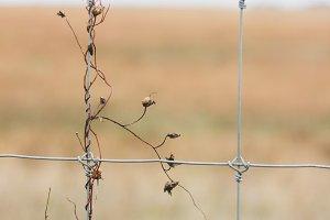 Autumn fence (portrait)