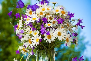 Bouquet of daisies and bluebells