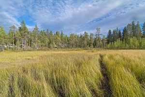 Path hrough the swampy meadow