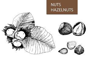 Nuts. Hazelnuts.