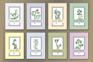 24 Herbal Cards