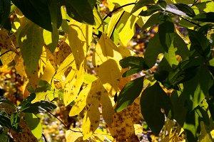 Luminous Leaves