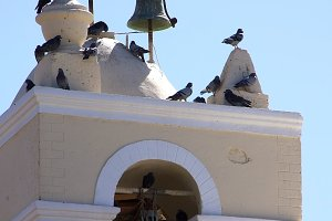 Birds in the Belfry