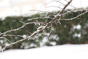 Winter Branches 2