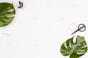Monstera leaves desktop mockup