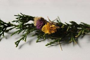 Little Flora