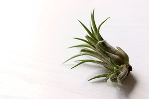 Small Air Plant 2.0