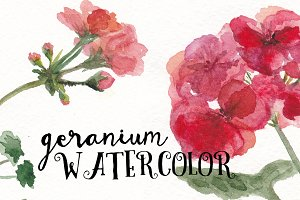 Watercolor geranium flowers set