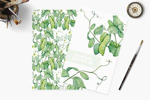Watercolor botanic peas