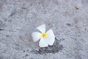 White flower that fell on the floor.