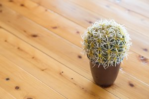 Small cactus in a brown pot.